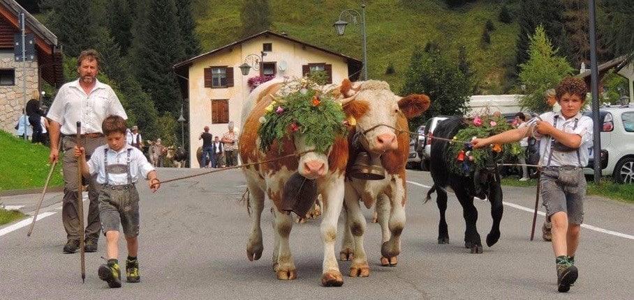 Sappamukki Sappada mucche